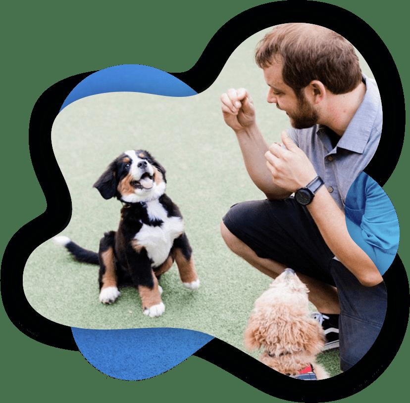 Professional Dog Trainers In Columbus Ohio