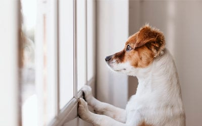 The Negative Impact Covid Has Had on Dogs