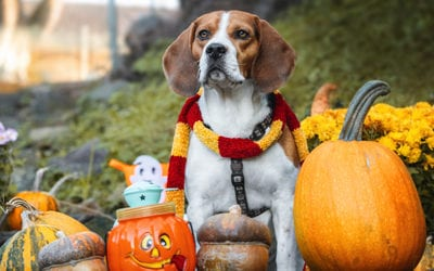Tips on Giving Your Dog the Best Halloween Ever