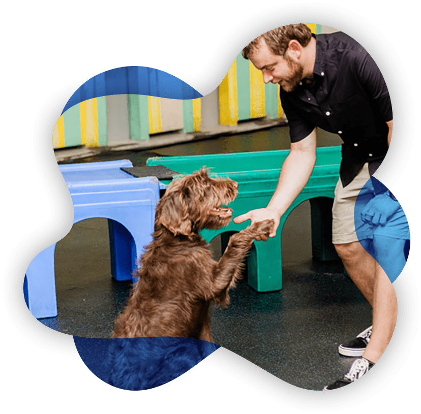Professional Dog Training in Columbus Ohio