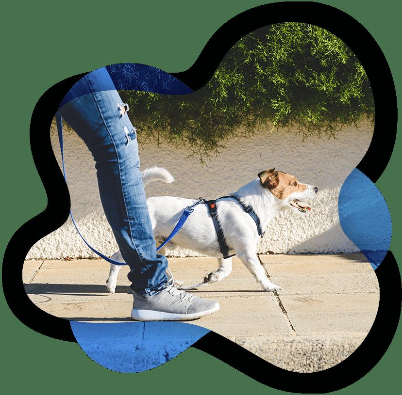 In home dog training in Columbus Ohio