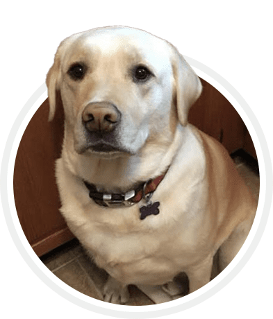 DOG TRAINING SUCCESS STORIES