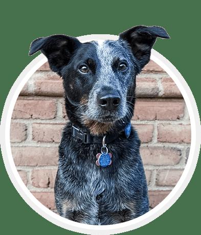 Beamer | Mentor Dog